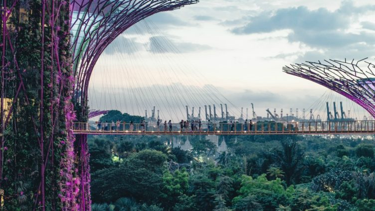 singapore super tree with suspension bridge